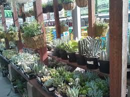 black friday home depot san ramon the home depot 53 photos u0026 90 reviews nurseries u0026 gardening