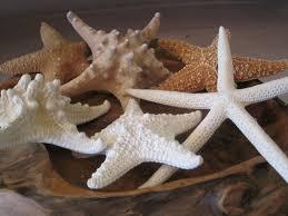 Starfish Home Decor Mixed 6 Pc Starfish Collection White Starfish Knobby Sugar