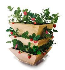 architec homegrown gourmet garden strawberry patch tower wood