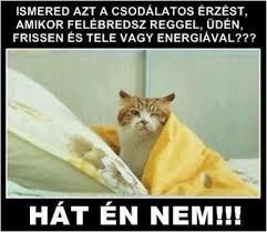 Cat In The Hat Meme - cat in the hat meme beautiful pictures vicces humor poén vicces hun