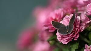 best images about butterflies on pinterest desktop 1920 1200