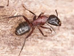 ways to send carpenter ants on the run hgtv