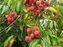 plants native to egypt do you know where your fruit comes from read this to find out