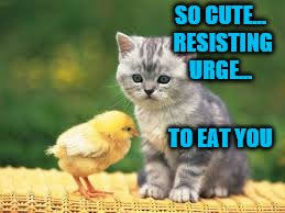 Chicken Meme Jokes - get your chicken memes and jokes ready for chicken week april 2 8