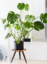 7 diys to fuel your tropical home decor addiction leaves plants