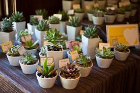 succulent wedding favors succulent wedding favors ecinvites