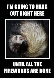 Ferret Meme - happy 4th of july remember to keep your everyday ferret