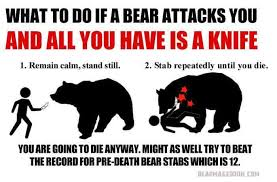 Bear Stuff Meme - bear advice album on imgur
