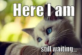 25 waiting meme meme cat and animal