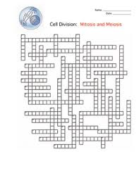this is a crossword puzzle on mitosis meiosis and cell division