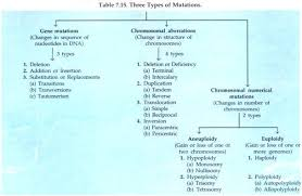 5 factors affecting genetic equilibrium hardy weinberg