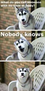Pun Dog Meme - 37 funny puns that are so bad they re simply hilarious animal dog