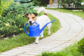 make your garden safe for your pets live the pet life