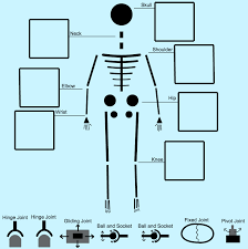 the skeletal system ck 12 foundation