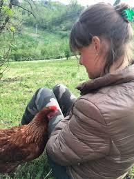 animali da cortile definizione gli animali da cortile le mie galline natura in mente calliopea