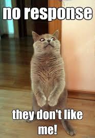 No Response Meme - no response they don t like me cat meme cat planet cat planet