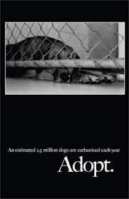 boxer dog adoption los angeles 10 u202215 u202217 sl california super urgent this boy needs a