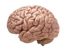 si e des motions dans le cerveau une prothèse dans le cerveau pour doper la mémoire passeur de sciences