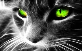 halloween cat eyes background 2015 09 22 page 143