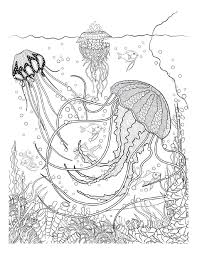 free coloring pages jellyfish botanical wonderland coloring book free printable free and hand drawn