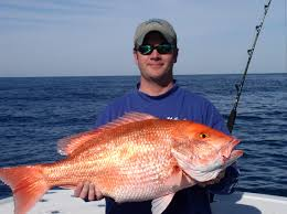red snapper caught offshore from freeport fishing freeport