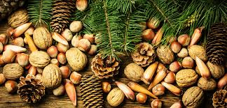 christmas nuts in bulk christmas mixed nuts christmas nut gift
