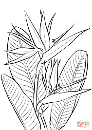 bird paradise plant coloring free printable coloring pages