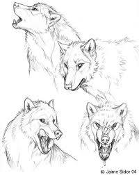 sketches part 1 canine by autlaw deviantart com on deviantart