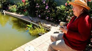 the woman who turned her backyard pool into a giant fish pond