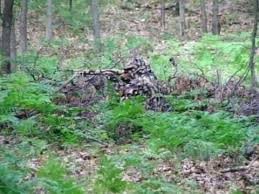 Color Blind Camouflage Test Best Camouflage Pattern Youtube