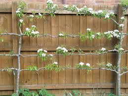 Small Garden Bed Design Ideas by Download Trees For Small Gardens Solidaria Garden