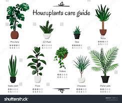 popular common houseplants care guide vector stock vector