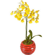 Orchid Delivery Buy Magnificent Orchids Delivery In France Aquarelle