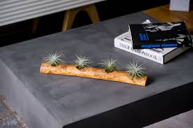 What Is A Decoration Air Plants A Whole New World Of Beautiful Nature Akamatra