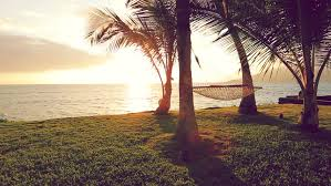 Trees Backyard Hammock And Palm Trees At Sunset With Gorgeous Sun Flares Hammock