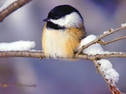 Animals In The Winter Winter Animal Scenes Wallpaper Wallpapersafari