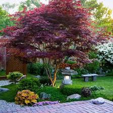 Small Backyard Japanese Garden Ideas 25 Beautiful Japanese Maple Garden Ideas On Pinterest Acer