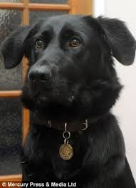 16 best cutsy images on pinterest guide dog animals and blind