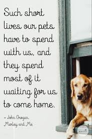 Quotes About Coming Home by Dog Quotes We Love There U0027s Nothing Sweeter Than Coming Home To