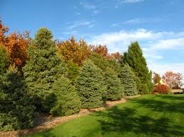 acreage landscaping google search lots of pics landscaping