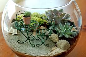 Miniature Indoor Plants by Miniature Gardening Badding Bros Farm Market And Garden Center