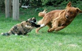 Cat Fight Meme - the relationship between cats and dogs told in gifs the barkpost