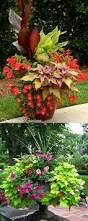 24 stunning container garden planting designs planting plants
