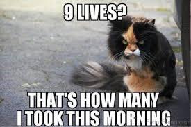 Good Morning Meme - 25 good morning memes to kickstart your day sayingimages com