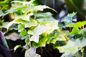 natural air purifiers easy to care for indoor plants