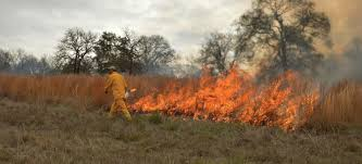 prairie oak ecosystems of the smoke fire and the southern post oak savanna u2014 studio outside blog