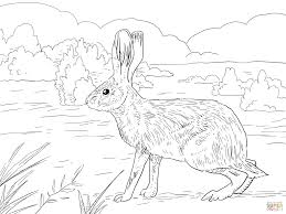 hares coloring pages free coloring pages