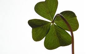 10 luck symbols around the world four leafed clover mag for