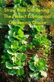best 20 straw bale gardening ideas on pinterest hay bale