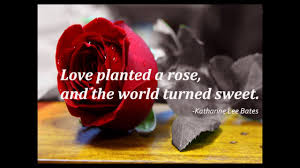 quotes images shayari happy rose day 2016 quotes greetings wishes hd images ideas